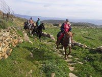 Anthea Hotel Tinos | Horse riding