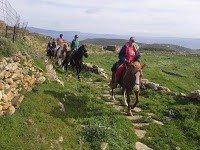 Anthea Hotel Tinos | Horse riding